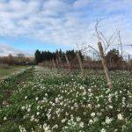 vignes en hiver a ventenac cabardes