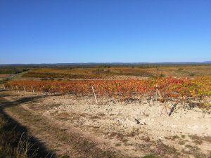 Vue sur les vignes a ventenac cabardes aude sud de france